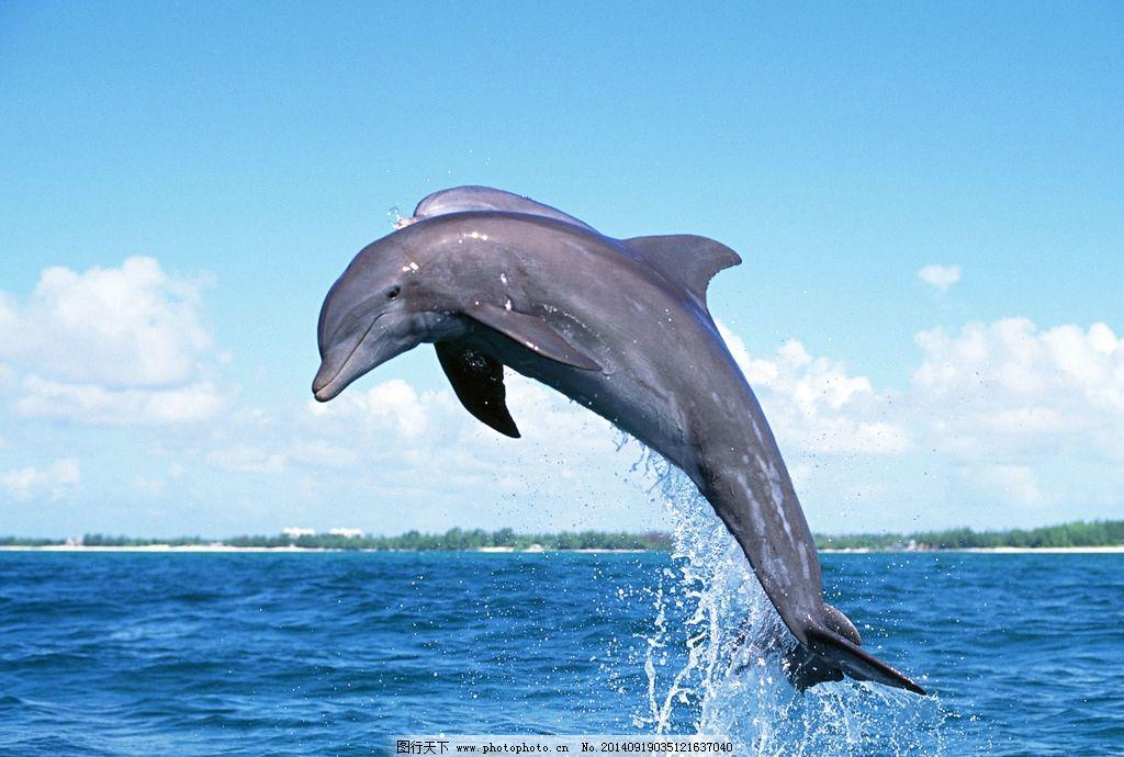 水底生物 生物世界 水底动物 海洋 鱼 鲨鱼 冷血动物 海狮 海豚 鲸鱼