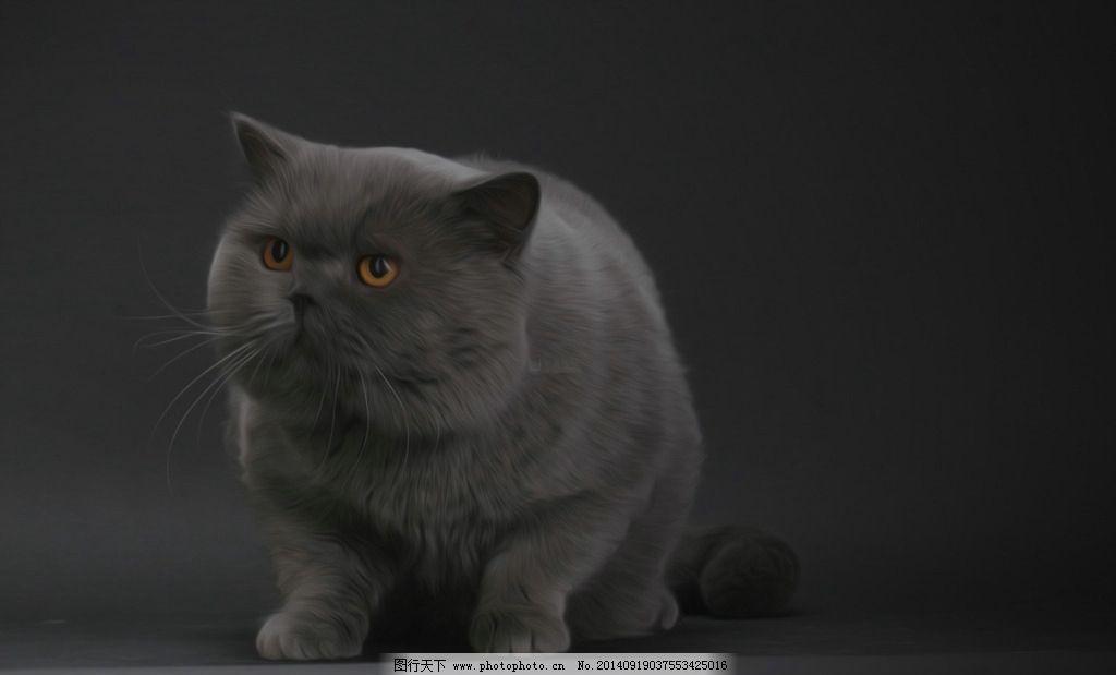 壁纸 动物 猫 猫咪 小猫 桌面 1024_619