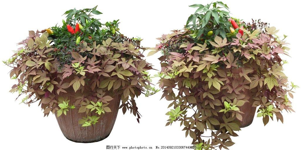 垂吊花 盆栽 植物 绿色 红花 花盆 盆栽 设计 psd分层素材 psd分层