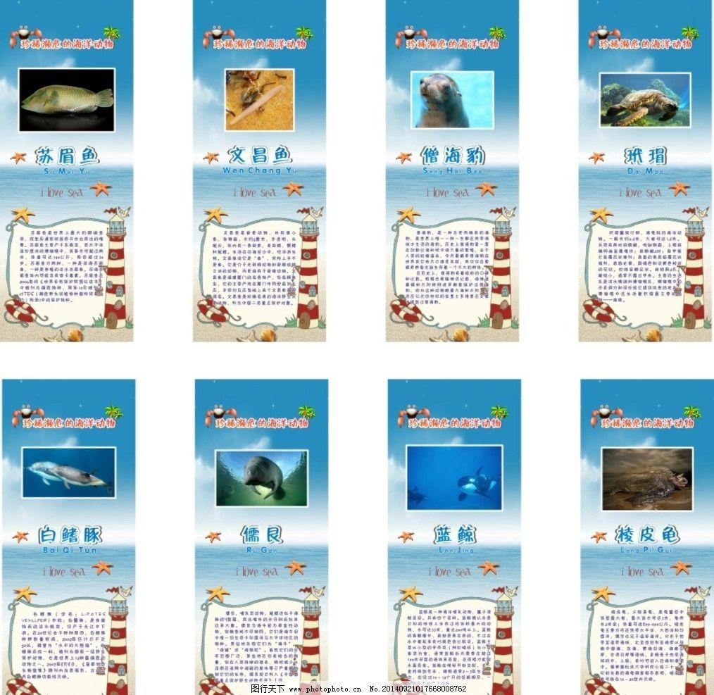 濒危海洋动物图片