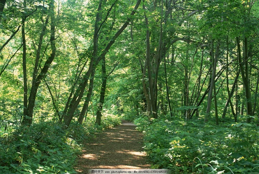 壁纸 风景 森林 桌面 1024_690