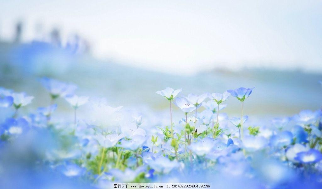 梦幻花朵 菊花 蓝天 云彩 绚丽风景 唯美 梦幻背景 美丽花朵