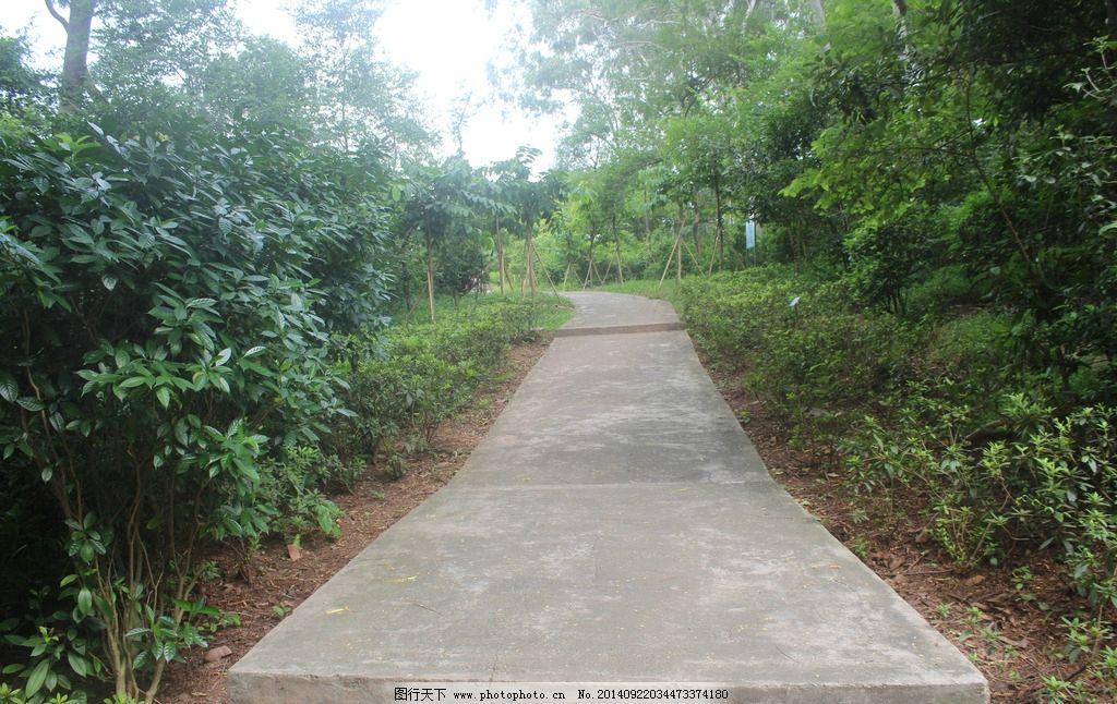 公园小路 摄影 绿树 花草 国内旅游 旅游摄影 弯曲小路 森林小路