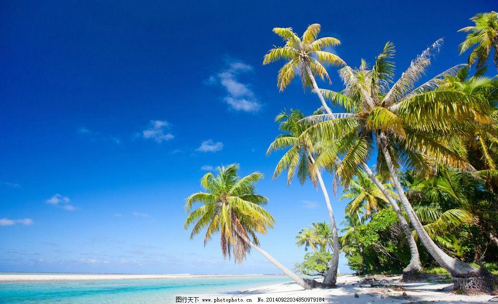 海滩风景 海滩椰树风景 海滩 椰树 海边 蓝天白云 天空 海边椰树 夏日