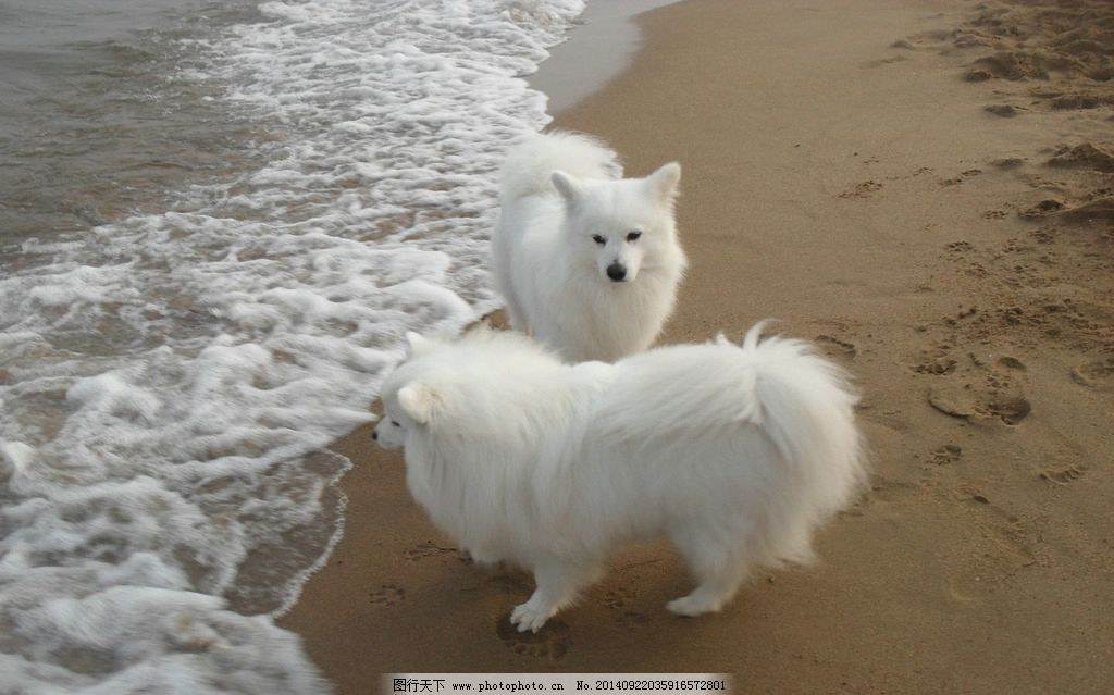 可爱小白狐狸图片
