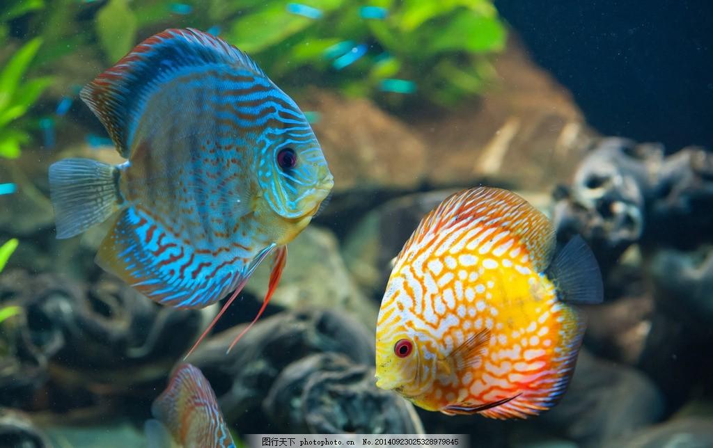 海底世界 鱼 水草 鱼类 海底素材 大海 海水 光线 蓝色 梦幻