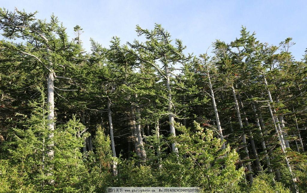 树林 大树 小树 蓝天 森林 摄影 自然景观 山水风景 72dpi jpg