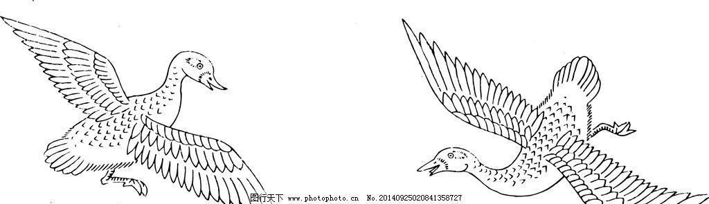 鸟 飞禽 动物 矢量 线图片