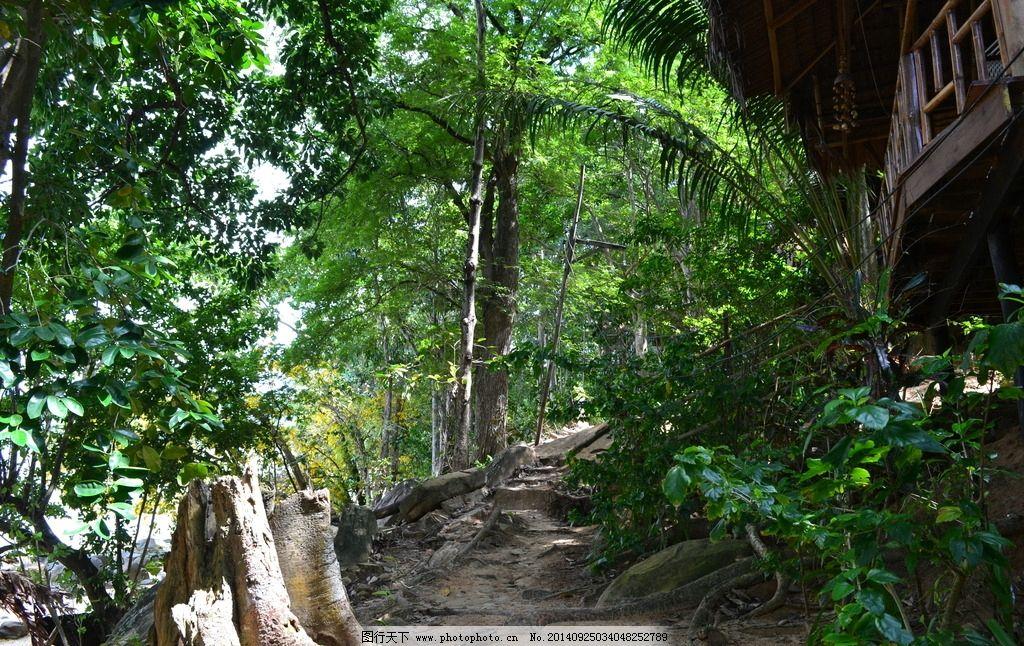 旅馆 山间小屋 茅草屋 温馨 浪漫 木屋 旅游风光 森林 山林 小路 山间