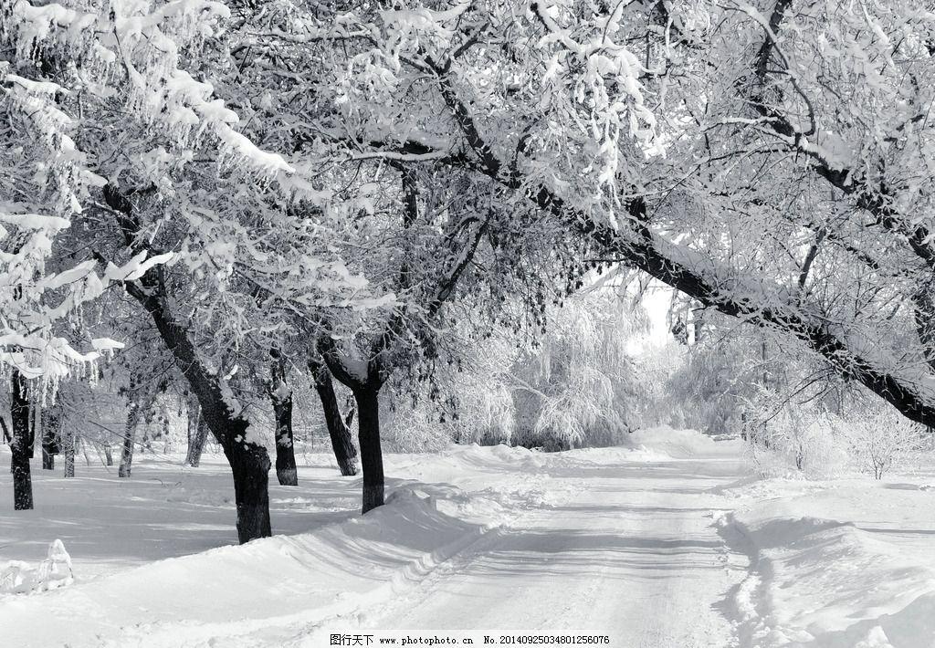 冬天 冬季 冬日 寒冬 冰雪 下雪 雪地 森林 阳光 冬天风景 冬天景色