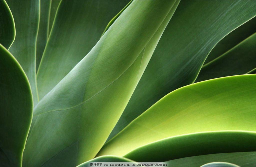 绿叶植物图片