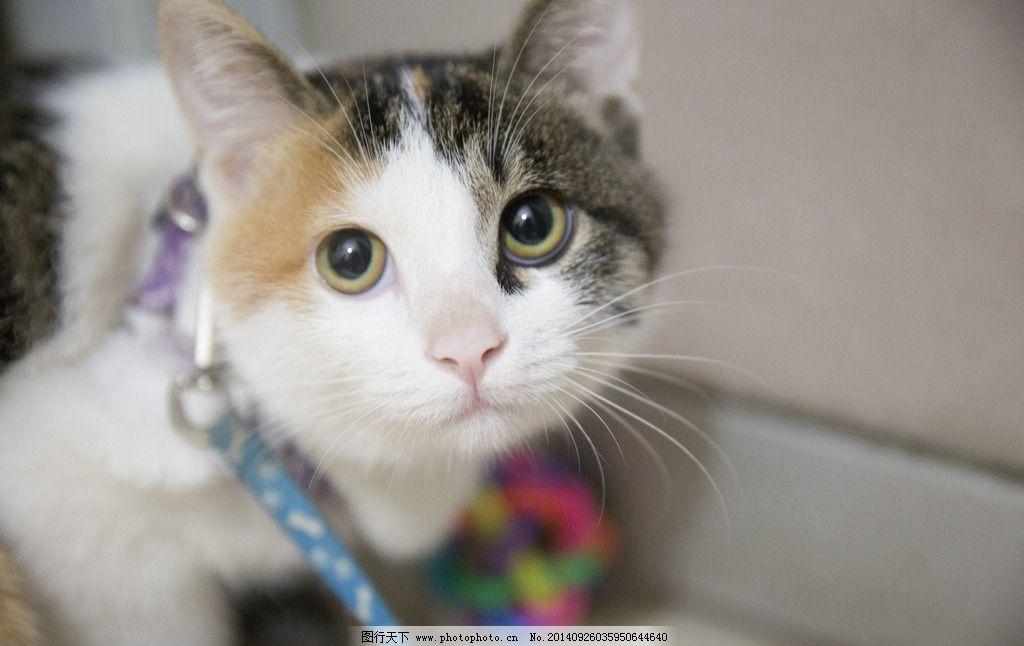 猫 猫咪 猫的眼睛 老虎猫 瞳孔 摄影