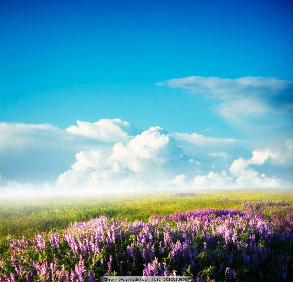 秦皇岛 风景 风光 旅行 自然 植物 唯美 清新 意境 花 花海 蓝天 白云