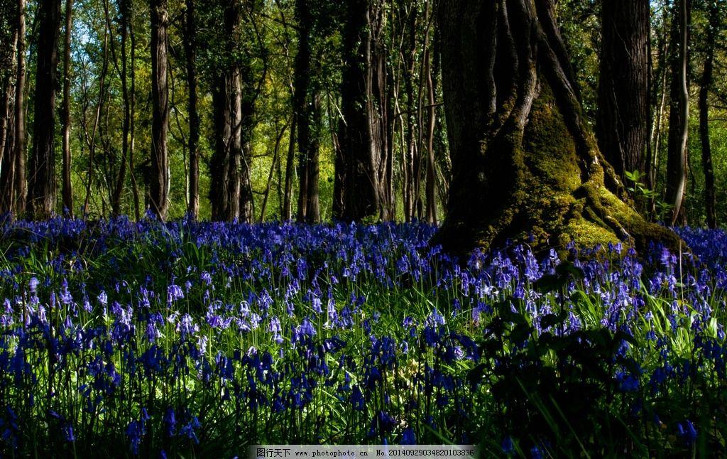 森林中的花朵图片
