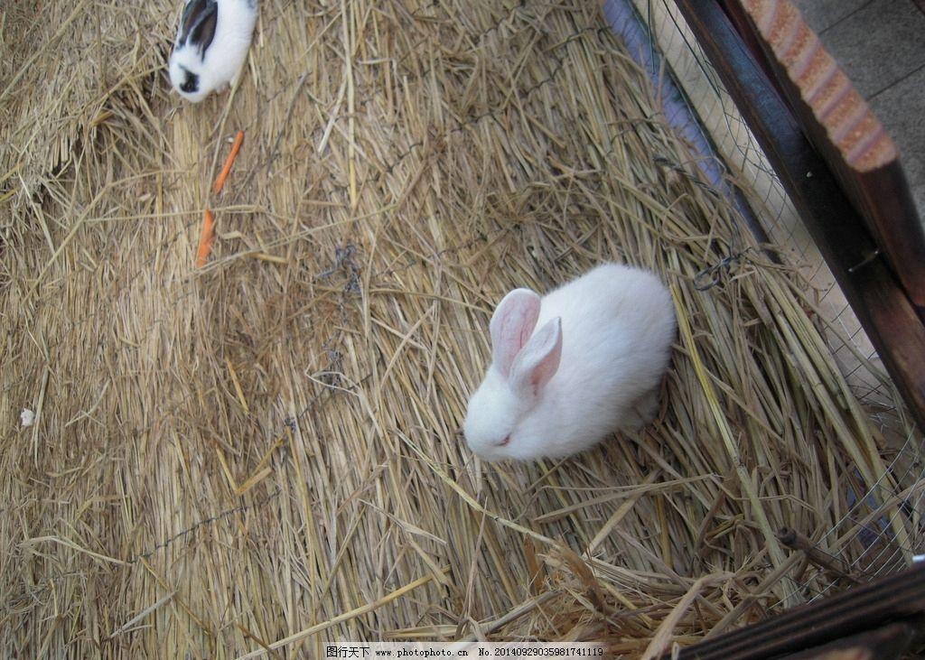 兔子窝 草窝 窝 兔窝 小白兔 白兔 小花兔 小动物 动物 动物世界 兔子